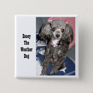 Zooey with bows, Zooey The Weather Dog Pinback Button