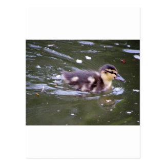 Zooming Duckling Postcard