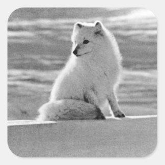 Zorro ártico 1970 de los E.E.U.U. Alaska Pegatina Cuadrada