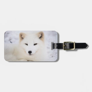 Zorro ártico blanco en nieve etiqueta de maleta