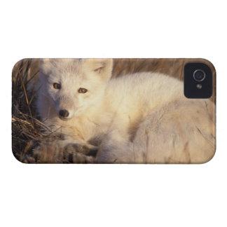 zorro ártico, lagopus del Alopex, capa que cambia  iPhone 4 Funda