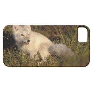zorro ártico, lagopus del Alopex, capa que cambia iPhone 5 Carcasa