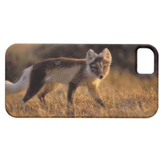 zorro ártico, lagopus del Alopex, capa que cambia iPhone 5 Fundas