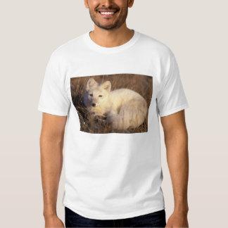 zorro ártico, lagopus del Alopex, capa que cambia Remera