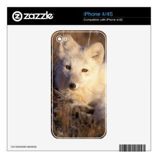 zorro ártico, lagopus del Alopex, capa que cambia Skins Para iPhone 4S