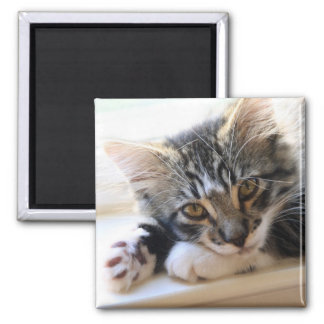 Zorro By The Window Magnet Magnets