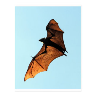 Zorro de vuelo espeluznante de Halloween (palo de Postal
