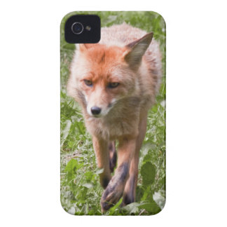 Zorro rojo Case-Mate iPhone 4 fundas