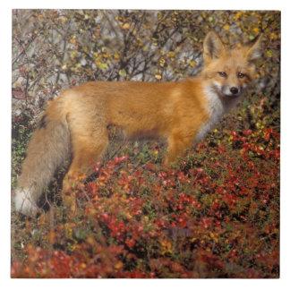 zorro rojo, vulpes del Vulpes, en colores de la ca Teja Cerámica