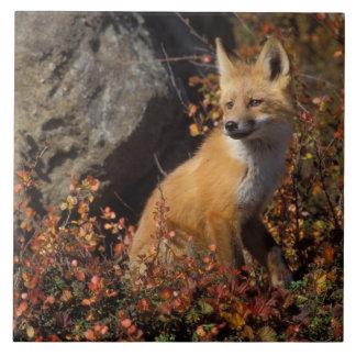 zorro rojo, vulpes del Vulpes, en colores de la ca Azulejo Cuadrado Grande