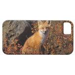 zorro rojo, vulpes del Vulpes, en colores de la ca iPhone 5 Protectores