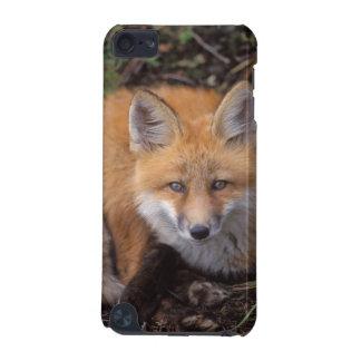 zorro rojo, vulpes del Vulpes, en colores de la ca Funda Para iPod Touch 5G