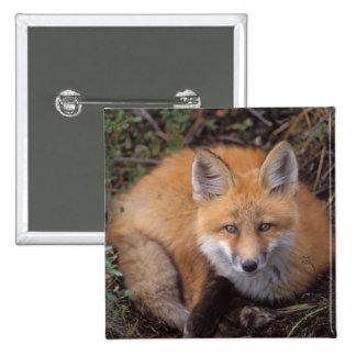 zorro rojo, vulpes del Vulpes, en colores de la ca Pin Cuadrada 5 Cm
