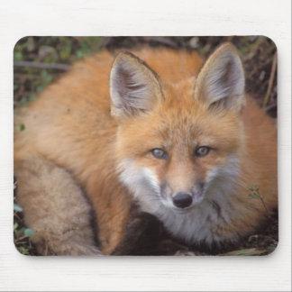 zorro rojo, vulpes del Vulpes, en colores de la ca Mousepad