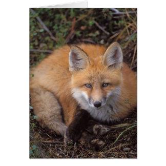 zorro rojo, vulpes del Vulpes, en colores de la ca Tarjeta De Felicitación
