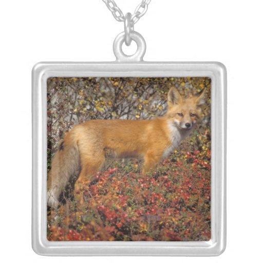 zorro rojo, vulpes del Vulpes, en colores de la Colgante Cuadrado