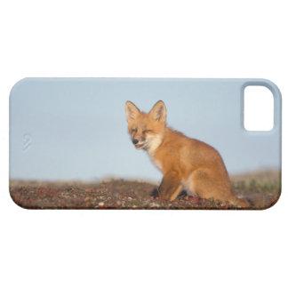 zorro rojo, vulpes del Vulpes, en colores de la iPhone 5 Carcasa