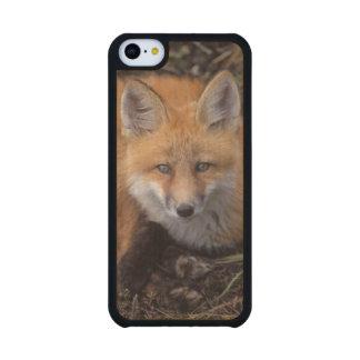 zorro rojo, vulpes del Vulpes, en colores de la Funda De iPhone 5C Slim Arce