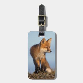 zorro rojo, vulpes del Vulpes, en las 1002 áreas d Etiquetas Bolsas