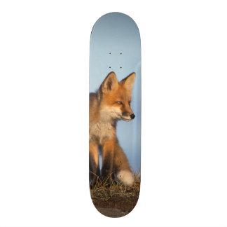 zorro rojo, vulpes del Vulpes, en las 1002 áreas d Tablas De Skate