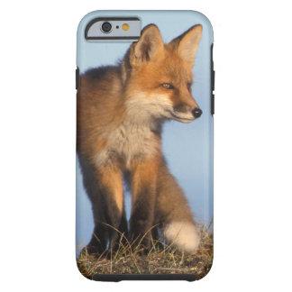 zorro rojo, vulpes del Vulpes, en las 1002 áreas Funda De iPhone 6 Tough