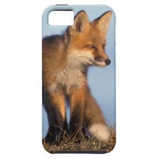 zorro rojo, vulpes del Vulpes, en las 1002 áreas Funda Para iPhone 5 Tough