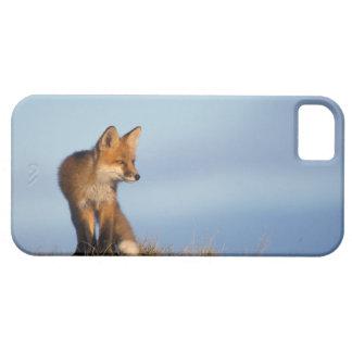 zorro rojo, vulpes del Vulpes, en las 1002 áreas iPhone 5 Funda