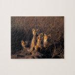 zorro rojo, vulpes del Vulpes, equipos en su guari Puzzle Con Fotos