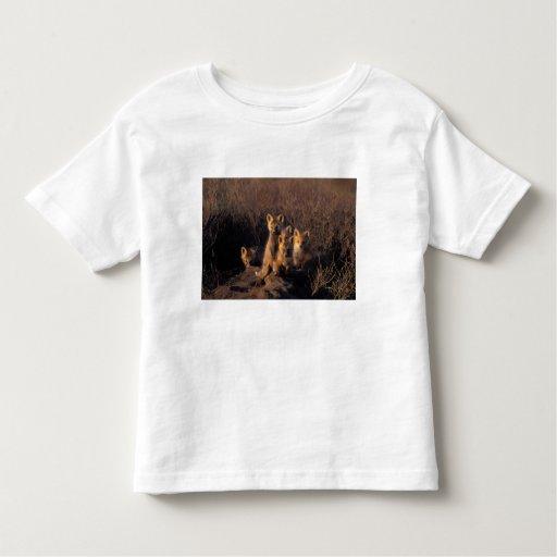 zorro rojo, vulpes del Vulpes, equipos en su T-shirts