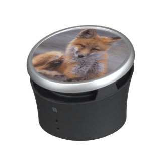 zorro rojo, vulpes del Vulpes, perrito que se Altavoz Con Bluetooth