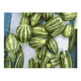 Zucchini and Winter Squash Harvest Post Card
