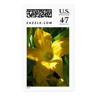 Zucchini Blossom Postage
