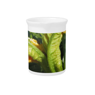 Zucchini plant in blossom in the vegetable garden beverage pitcher