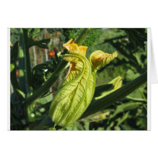 Zucchini plant in blossom in the vegetable garden card