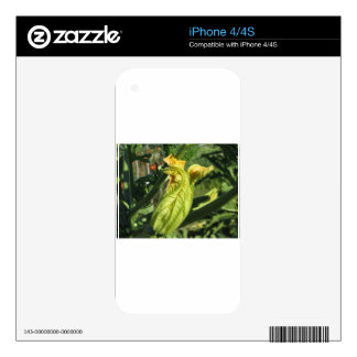 Zucchini plant in blossom in the vegetable garden iPhone 4 skins