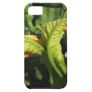 Zucchini plant in blossom in the vegetable garden iPhone SE/5/5s case