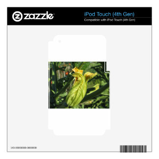 Zucchini plant in blossom in the vegetable garden iPod touch 4G skin