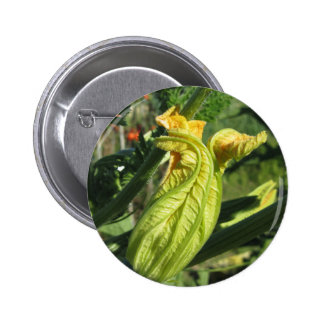 Zucchini plant in blossom in the vegetable garden pinback button
