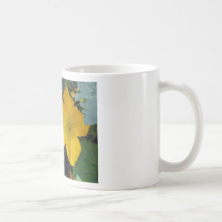 Zucchini Squash Blossom - photograph Classic White Coffee Mug