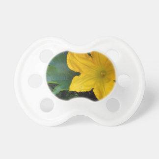 Zucchini Squash Blossom - photograph Pacifiers