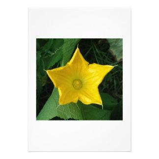 Zucchini Star Flower Custom Invites