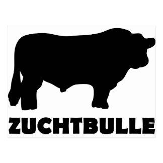 Zuchtbulle Black Angus Postcard