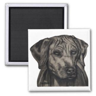 Zulu - Rhodesian Ridgeback Dog Art 2 Inch Square Magnet