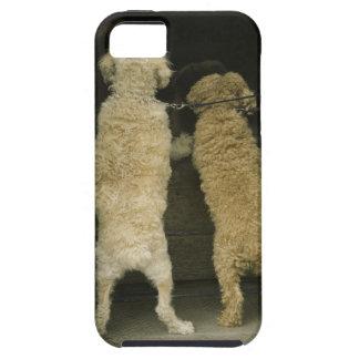 Zwei Hunde, die im Türfenster, hintere Ansicht sch iPhone SE/5/5s Case