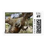 zzzzzzzz postage stamps